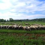troupeau blog